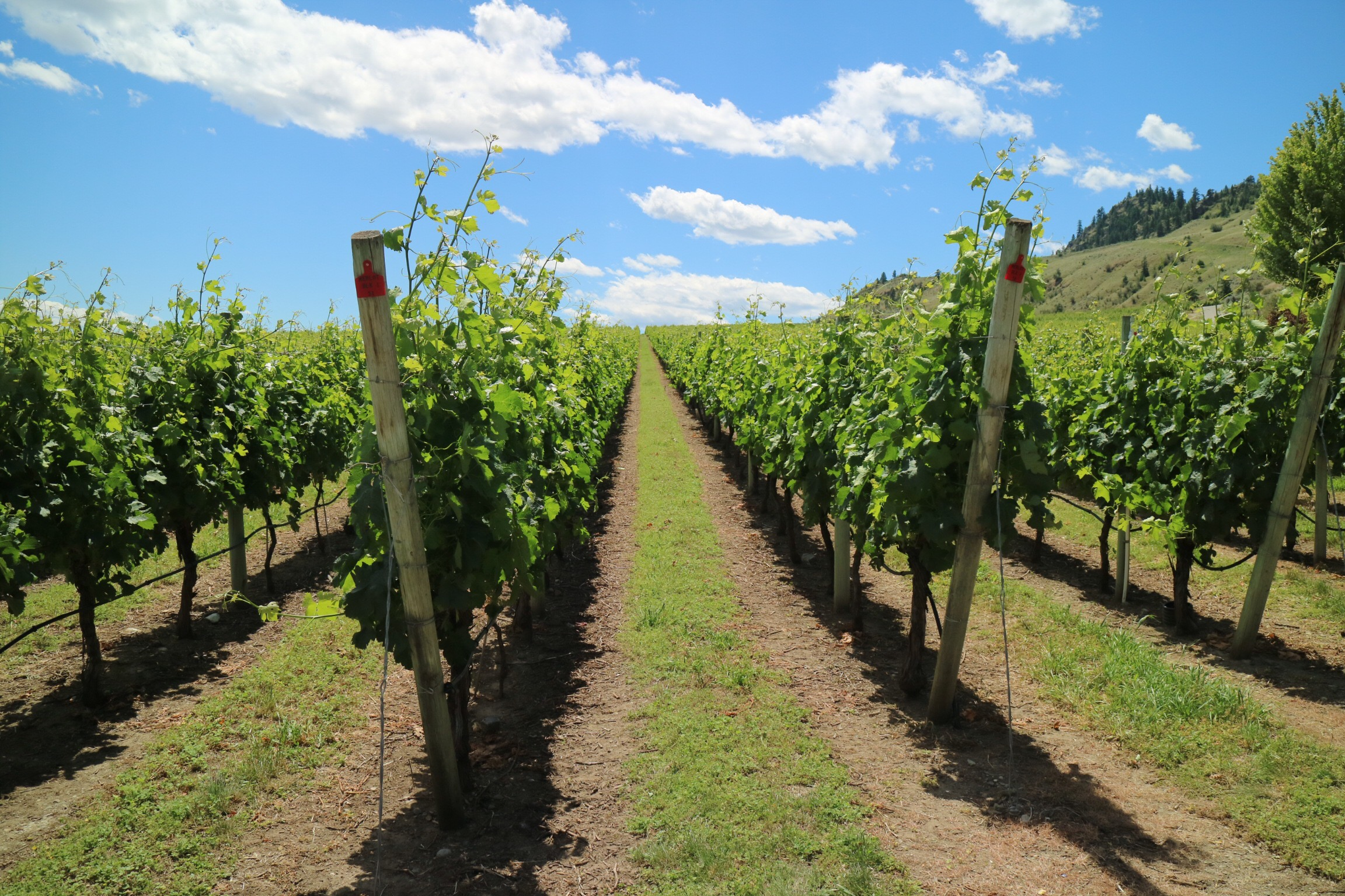 Okanagan Vinyards and Wineries.
