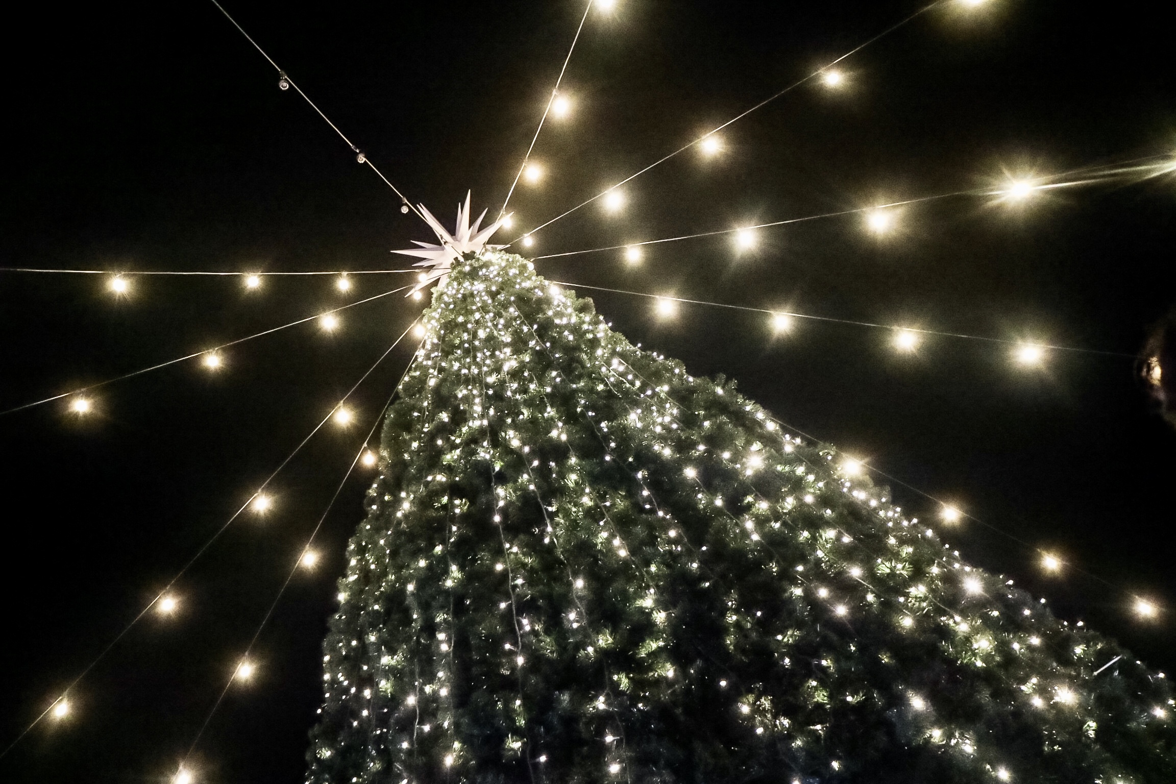 Walk-In Christmas Tree